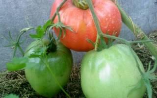 Почему так популярен томат Батяня?
