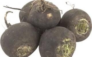 Сок черной редьки – природный сироп от кашля