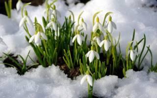 Майские цветы: какие культуры цветут весной