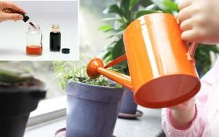 Как поливать йодом комнатные цветы