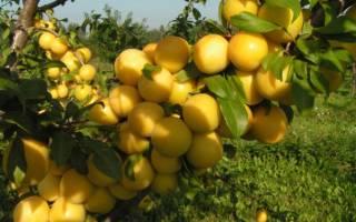Как посадить саженцы плодовых деревьев осенью?