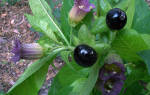 Какие растения нельзя выращивать на даче?