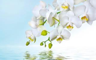 У орхидеи на цветоносе появились листья