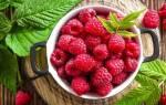 Самые лучшие сорта малины для юга России