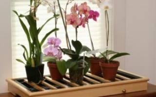 Нужны ли дырки в горшке для орхидеи