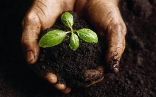 Дерново-подзолистые почвы – головная боль дачника