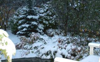 Работы в саду в ноябре в Сибири