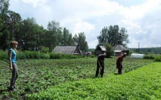 Бурьян на огороде – как избавиться от растений-паразитов?