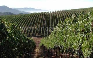 Земля для саженцев винограда