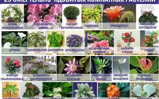 Какие комнатные цветы нельзя держать дома