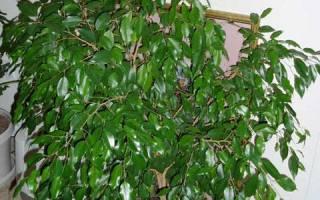 Комнатное цветоводство или как вырастить домашнюю оранжерею?