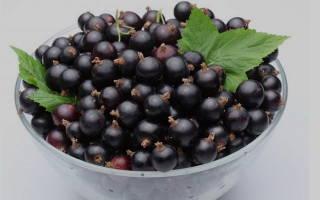 Посадка смородины осенью черенками – как угодить ягоде?