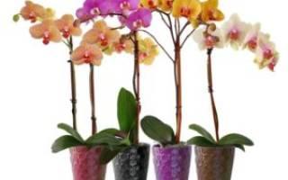 Опыление орхидей в домашних условиях