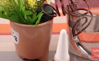 Автоматический полив комнатных растений – как организовать правильно