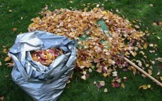 Убирать ли листву осенью на даче?
