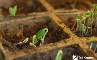 Как посадить огурцы на даче?
