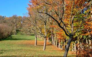 Как обработать саженцы яблони осенью?