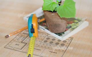 Какие овощи посадить на даче?
