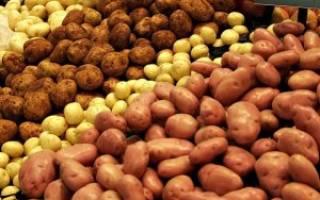 Картофель в Сибири выращивание