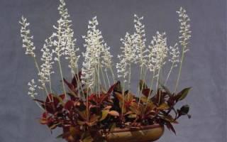 Можно ли орхидею посадить в землю