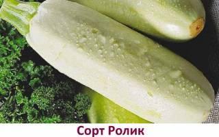 Лучшие сорта кабачков для Сибири