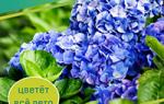 Где лучше посадить лилии на дачном участке?