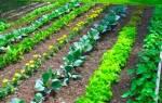 Как организовать огород на даче?