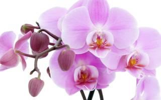 Можно ли летом выносить орхидеи на улицу