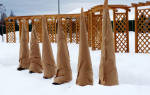 Как утеплить корни саженцев на зиму?