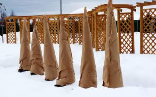 Утепление молодых саженцев деревьев на зиму