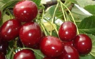 Укрытие вишни на зиму в Сибири