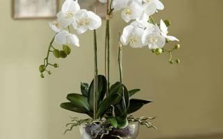 Что делать с орхидеей после цветения в домашних условиях