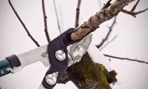 Обрезка деревьев зимой – все сделаем правильно сами!