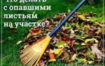 Что делать с опавшими листьями на даче?