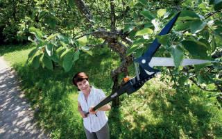 Ручной сучкорез как инструмент для обрезки деревьев