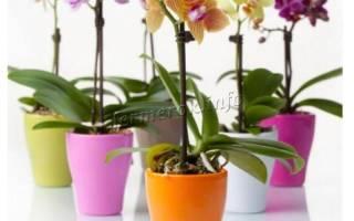 Орхидея желтеет лист что делать