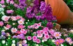 Планирование цветника на дачном участке