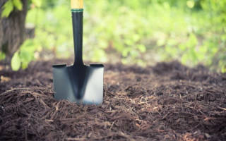 Как посадить шампиньоны на даче?