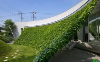 Как загородиться от соседей на даче?