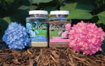 Подкормка гортензии метельчатой весной для цветения