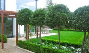 Что такое штамбовое дерево?