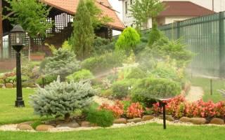 Как посадить пихту на даче?