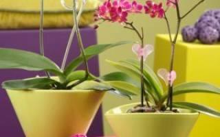 Можно ли орхидею сажать в непрозрачный горшок