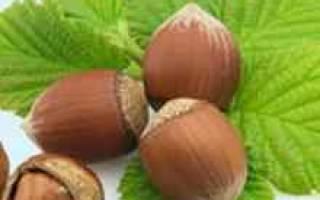 Как посадить орешник лещину на даче?