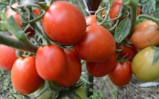 Сорта помидор для северо запада России