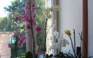 Как поливать орхидею – основные правила ухода за растением