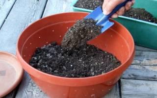 Как вырастить помидоры на даче?