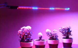 Лампа для комнатных цветов