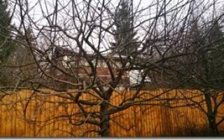 Обрезка яблонь осенью в средней полосе РФ