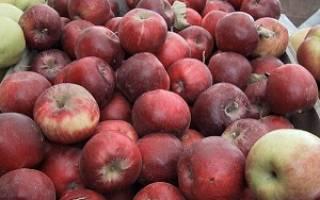 Сладкие сорта яблок для средней полосы